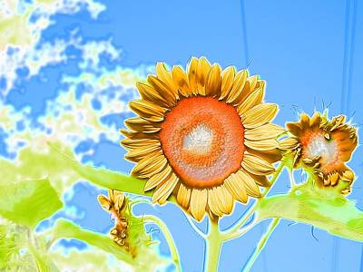 Photograph - Sunflower Beauty High In The Blue Sky by Belinda Lee
