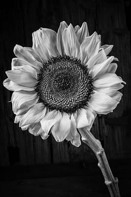 Black And White Sunflower Photographs Fine Art America