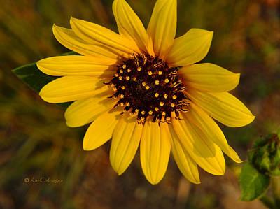 Photograph - Sunflower Bloom by Kae Cheatham