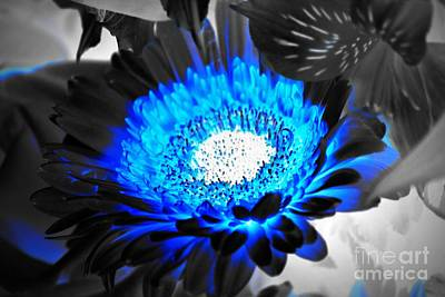 Photograph - Sunflower Blues by Patti Whitten
