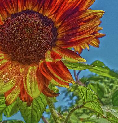 Photograph - Sunflower Bonnet by Amanda Smith