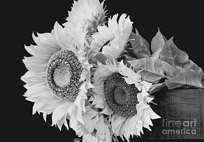 Photograph - Sunflower Bouquet In Monochrome by Jeannie Rhode