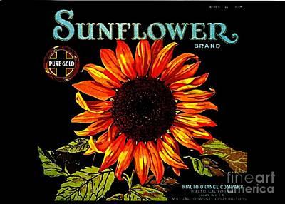 Crate Drawing - Sunflower Brand by Peter Gumaer Ogden