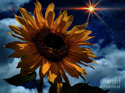 Photograph - Sunflower Brilliance IIi by Al Bourassa