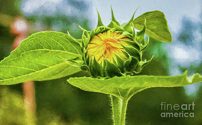 Photograph - Sunflower Bud - Digital Art by Kathleen K Parker