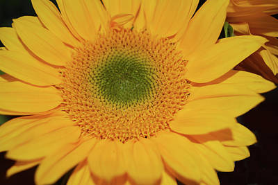Comic Character Paintings - Sunflower Burst by Aimee L Maher ALM GALLERY