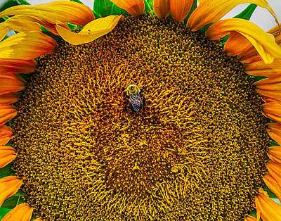 Photograph - Sunflower Close Up 3 by Leah Palmer