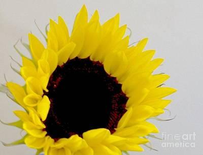 Wrap Digital Art - Sunflower Close Up by Marsha Heiken