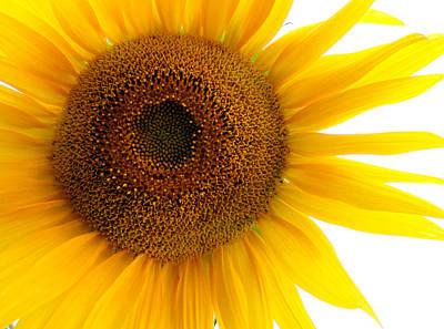 Sunflower Close-up Art Print by Tony Ramos