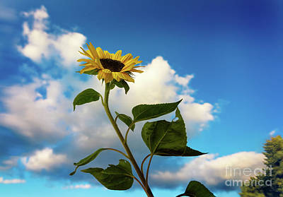 Photograph - Sunflower Clouds by Alissa Beth Photography