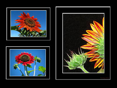 Print featuring the photograph Sunflower Collage by Joyce Dickens