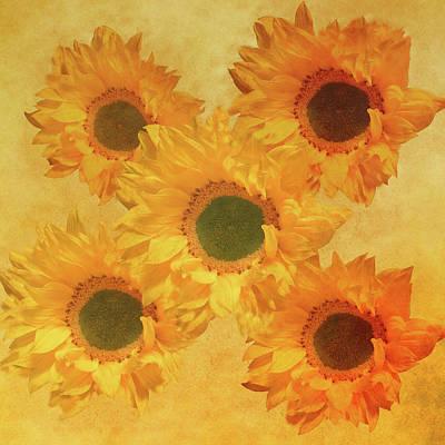 Mixed Media - Sunflower Creation 2 by Johanna Hurmerinta