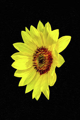 Photograph - Floating Sunflower by Kay Brewer