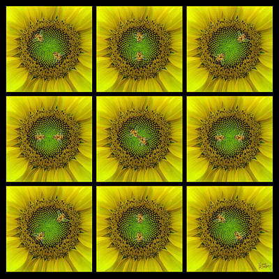 Sunflower Dance Ill Original by Doug Kreuger