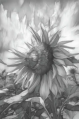 Photograph - Sunflower Dawn Black And White Drawing by Debra and Dave Vanderlaan