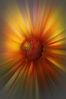 Photograph - Sunflower Dawn Zoom by Debra and Dave Vanderlaan