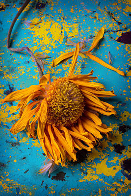 Art Object Photograph - Sunflower Decay by Garry Gay