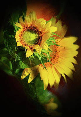 Mixed Media - Sunflower Delight by Georgiana Romanovna