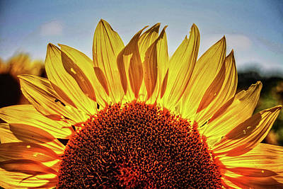 Photograph - Sunflower Detail No. 2 by Roger Passman