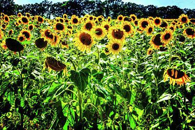 Photograph - Sunflower Detail No. 4 by Roger Passman