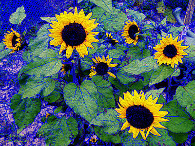 Photograph - Sunflower Dream by Natalie Holland