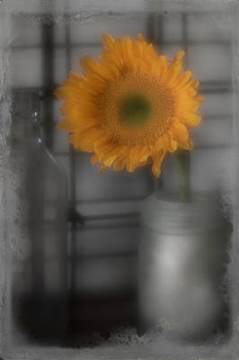 Photograph - Sunflower Dream Selective Color by Teresa Wilson