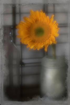 Photograph - Sunflower Dream by Teresa Wilson