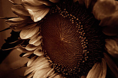 Photograph - Sunflower by Erica Kinsella