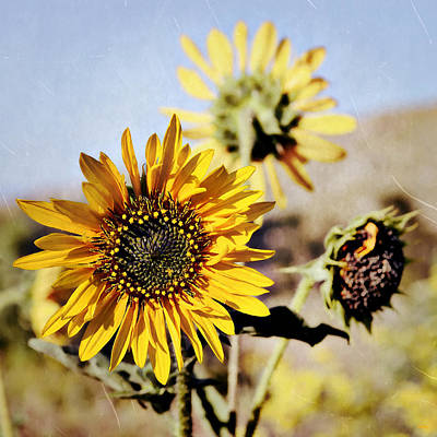 Photograph - Sunflower Family Portrait by Glenn McCarthy Art and Photography
