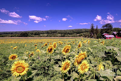 Photograph - Sunflower Farm by Jim DeLillo