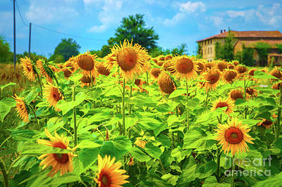 Photograph - Sunflower Field by Anna Om