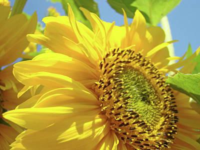 Polaroid Camera - Sunflower Field art print Yellow Sun Flower Floral Baslee by Patti Baslee