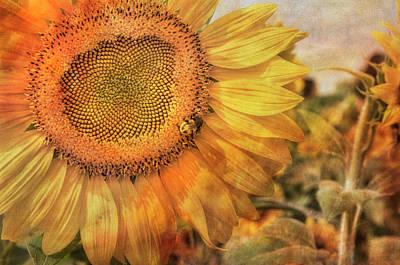 Sunflower Field At Colby Farm Art Print by Joann Vitali