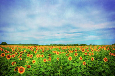 Photograph - Sunflower Field At Pope Farm Conservancy - Verona Wisconsin by Jennifer Rondinelli Reilly - Fine Art Photography