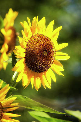 Photograph - Sunflower Field by Christina Rollo