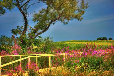 Photograph - Sunflower Field - Colby Farm by Joann Vitali