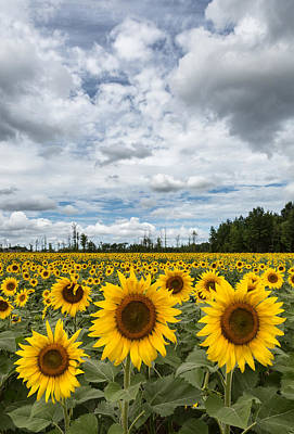 Photograph - Sunflower Field by Dale Kincaid