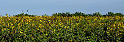 Photograph - Sunflower Field by James Granberry