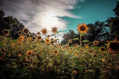 Photograph - Sunflower Field by Jessica Nelson