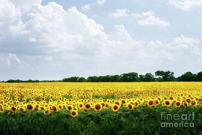 Painting - Sunflower Field by Tamyra Ayles