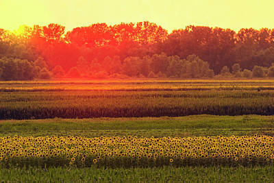 Photograph - Sunflower Fields At Sunset by Garry McMichael