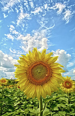 Photograph - Sunflower Fields by Bonfire Photography