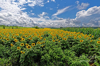 Photograph - Sunflower Fields Forever by Paul Mashburn