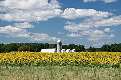 Photograph - Sunflower Fields by Michael Peychich