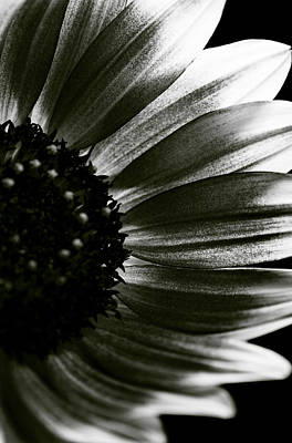 Photograph - Sunflower by Fine Arts