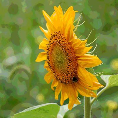 Floral Digital Art Digital Art Photograph - Sunflower Fun by Suzanne Gaff