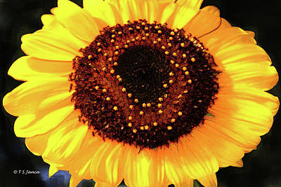 Digital Art - Sunflower Fun  by Tom Janca