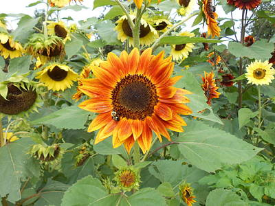 Photograph - Sunflower Garden by Diannah Lynch