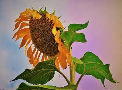 Photograph - Sunflower Garden by Jennifer Baulch
