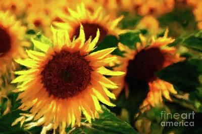 Sunflowers Royalty-Free and Rights-Managed Images - Sunflower Glory by Sarah Kirk